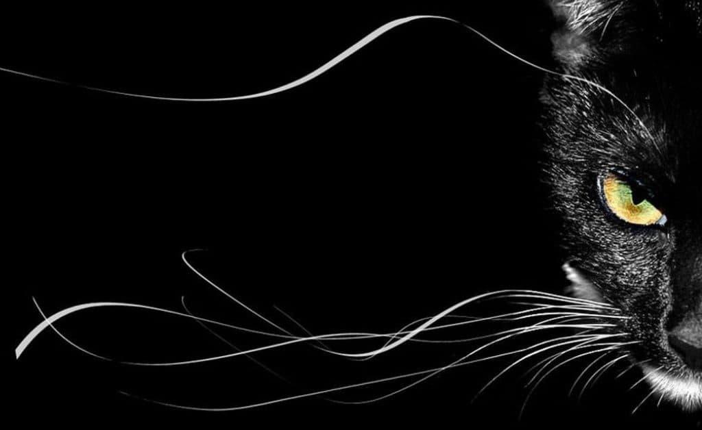 Новая профиль-ручка CAT в узкой системе Elephant